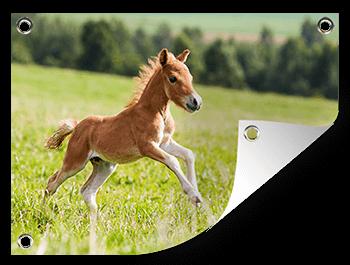 Paardenfoto op een tuinposter